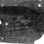 Den olme stuten på Idse - Stavanger Aftenblad 1950