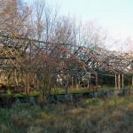 Glassfritt drivhus