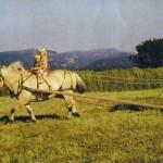 Hessjing hos Haaheller 1976 - Rolf, May-Gunn og Reinert