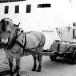 Hesten til Rolf paa kaien