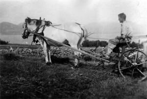 Reinert  med hest bak Stutshaugen